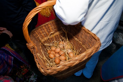 Kupljenje jaja, ožujak 2011. (foto: Stjepan Tafra)
